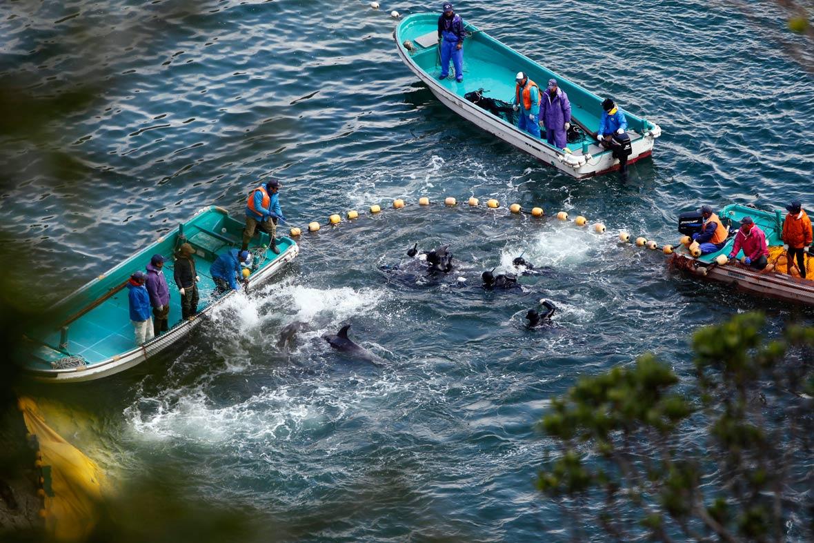 Taiji-dolphin-slaughter_14_03_2014