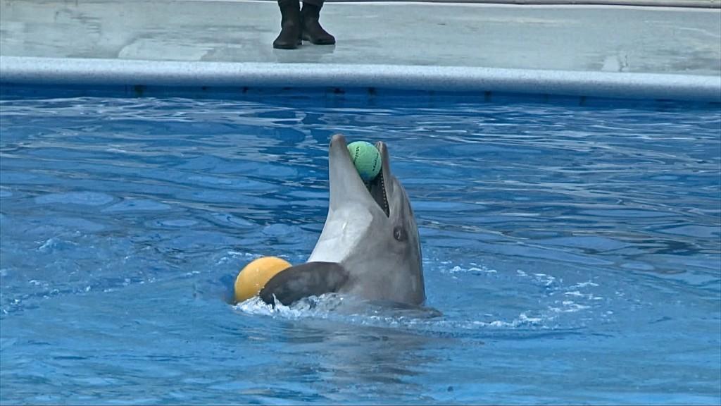 Дельфинарий._Фильм_-Рождённые_свободными-