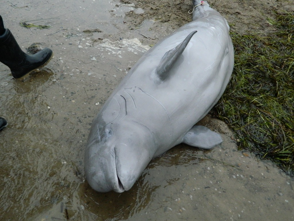 Рождённые_свободными-_обхождение_с_дельфинами
