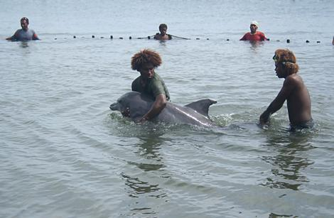 Dolphin at Gavutu Island, Ngella, Central Province, Solomon Islands.