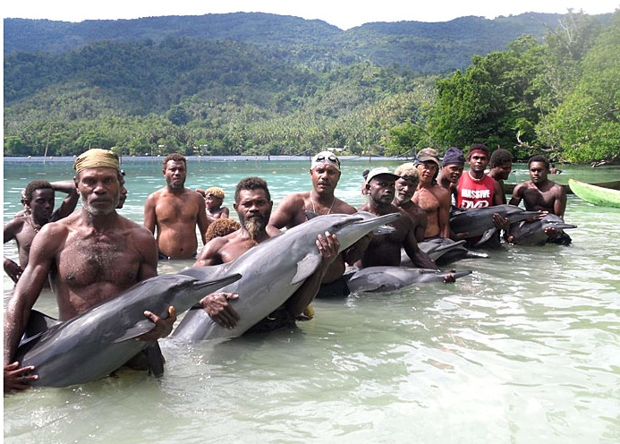 www.delfinariy.info_Solomon Islands_Malaita