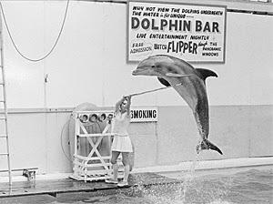 UK_dolphins