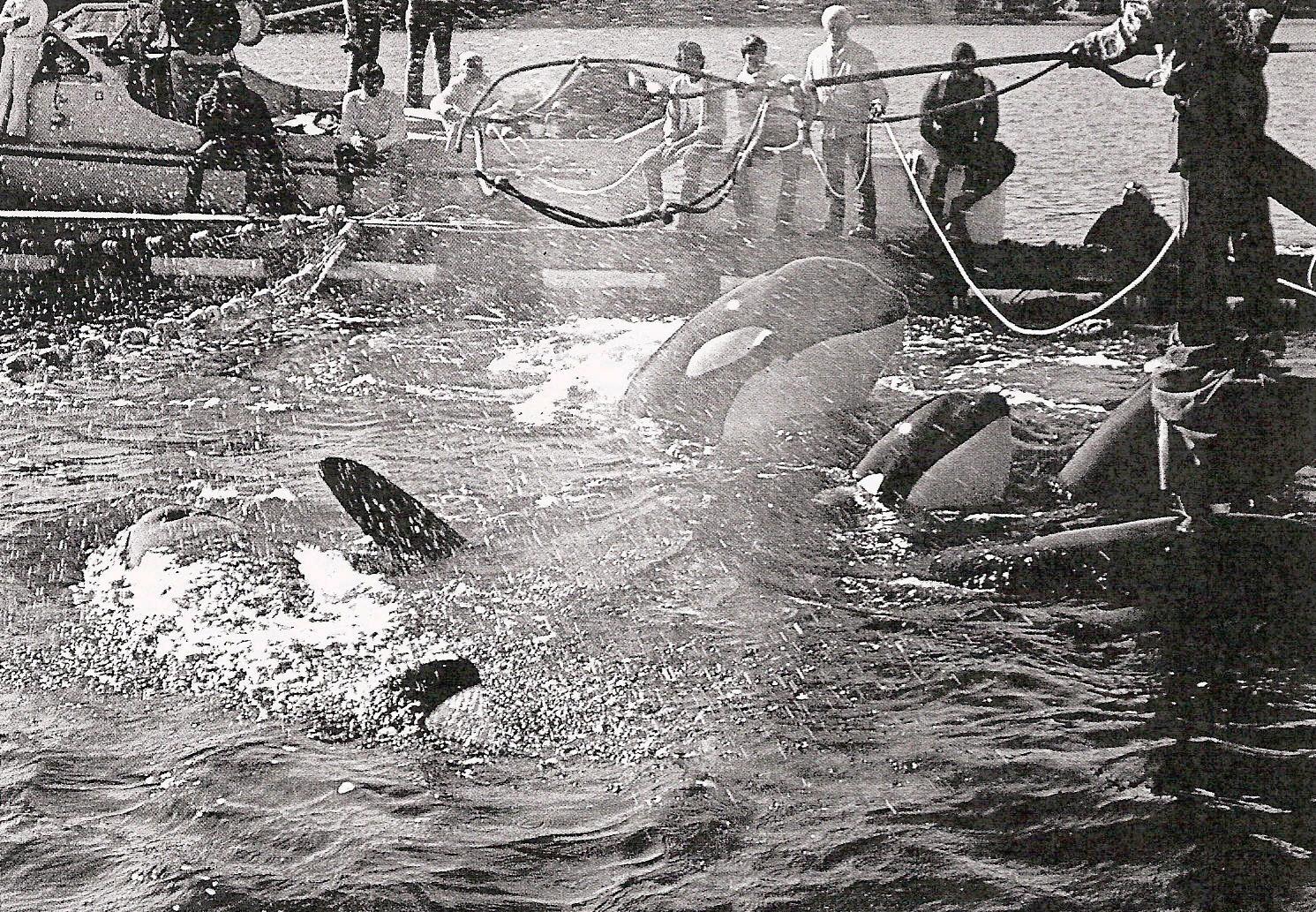 orca-capture