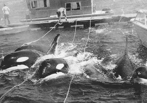 orca-ent-01